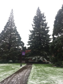 Linfield...fresh snow!